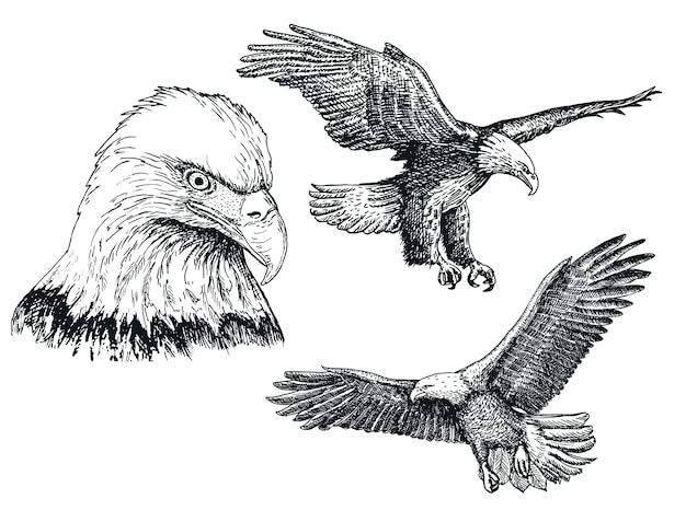 Eagle birdsketch icon set