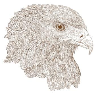 Eagle handzeichnung gravur illustration greifvogel