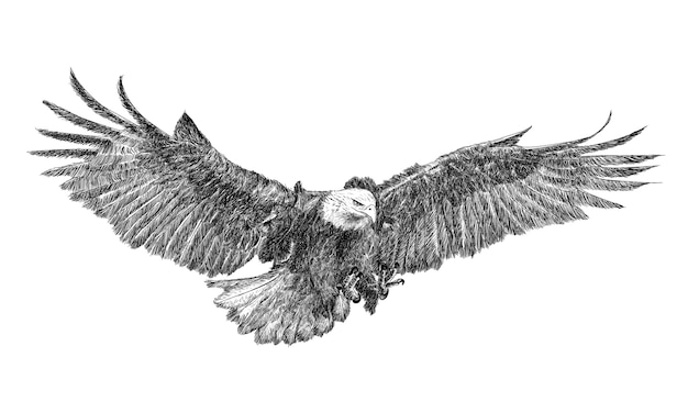 Eagle swoop attack hand draw