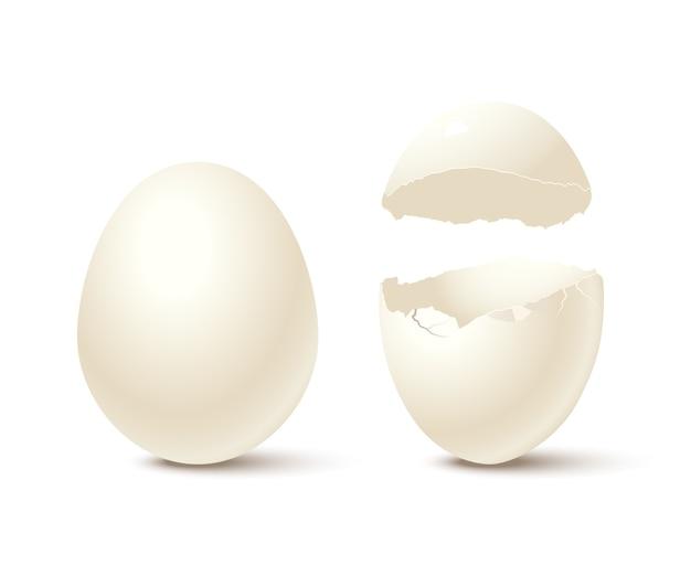 Ei und gebrochene leere eierschale lokalisiert auf weißem hintergrund.