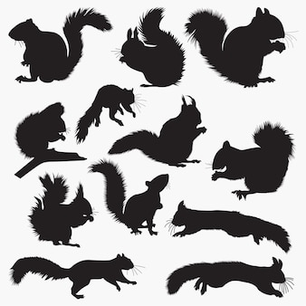 Eichhörnchen-silhouetten