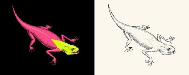 Eidechse oder gecko oder agama exotische reptilien oder blaue schlangen red mountain sinai rainbow agama wild