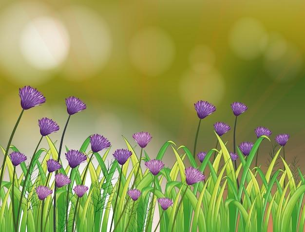 Ein briefpapier mit einem garten aus violetten blüten