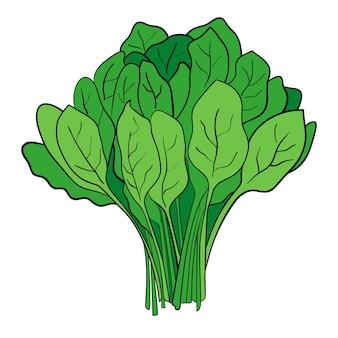 Ein bündel spinat