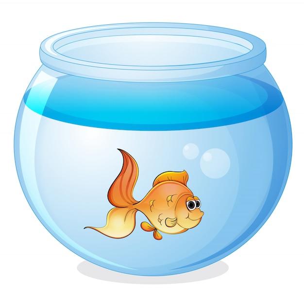Ein fisch und eine schüssel