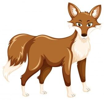 Ein Fuchs auf weißem Hintergrund