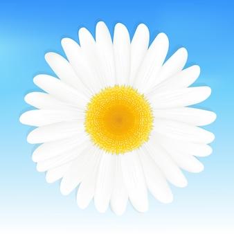 Ein gänseblümchen gegen blauen himmel