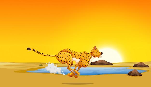 Ein gepard, der in die wüste läuft