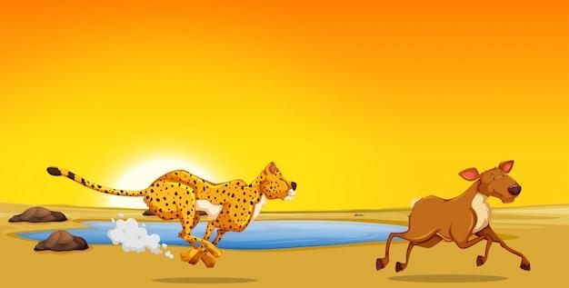 Ein gepard, der rotwild jagt