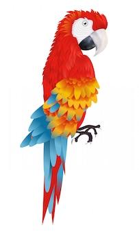 Ein heller ara-papagei lokalisiert auf weißer hintergrundillustration