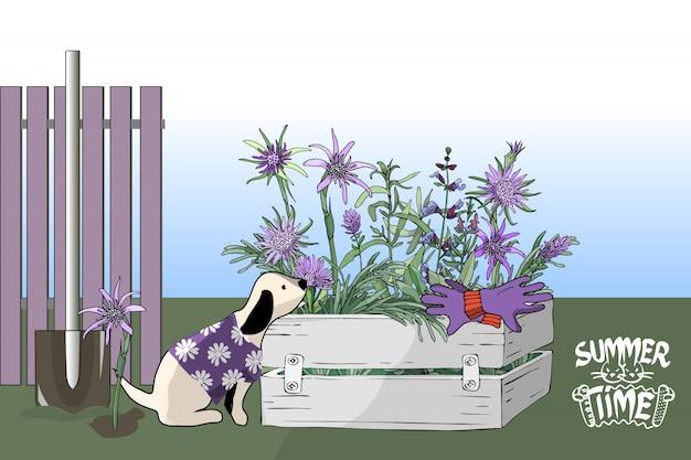 Ein kleiner hund im purpurroten t-shirt mit weißen blumen, gartenblumen in einem kasten.