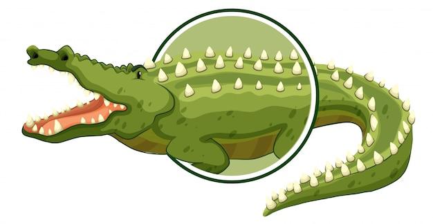 Ein krokodilaufkleber auf weißem hintergrund