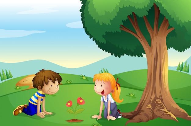 Ein mädchen und ein junge beobachten das wachsen der pflanze