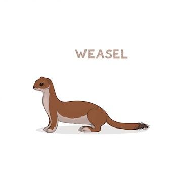 Ein niedlicher wiesel der karikatur, lokalisiert. tierisches alphabet.