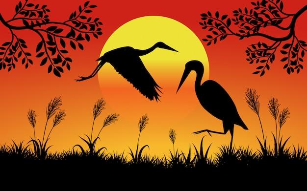 Ein paar vögel bei sonnenuntergang