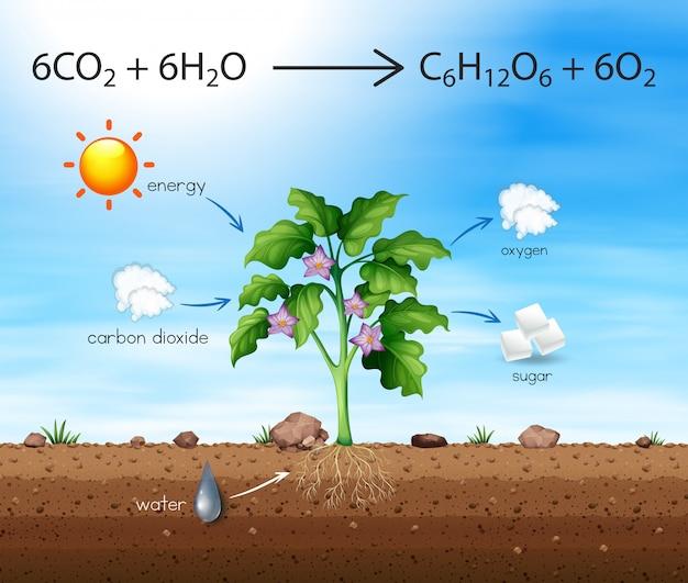 Ein prozess des baumes produziert sauerstoff