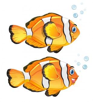 Ein satz clownfish auf weißem hintergrund