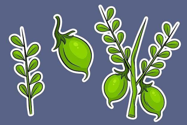 Ein set kichererbsen. frische kichererbsen auf einem zweig mit blättern. im cartoon-stil aufkleber. vektorillustration für design und dekoration.