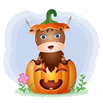 Ein süßer büffel im halloween-kürbis