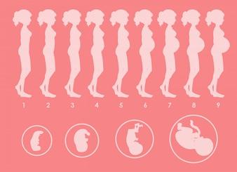 Ein Vektor der schwangeren Progression