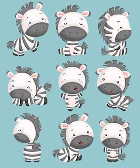 Ein vektor von netten zebras in vielen haltungen