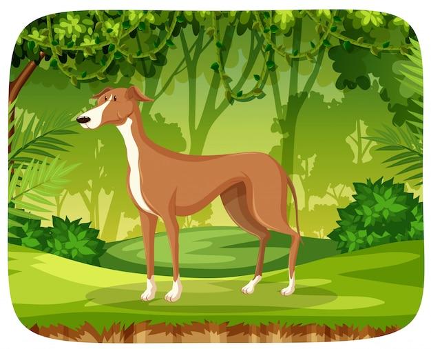 Ein windhund im dschungel