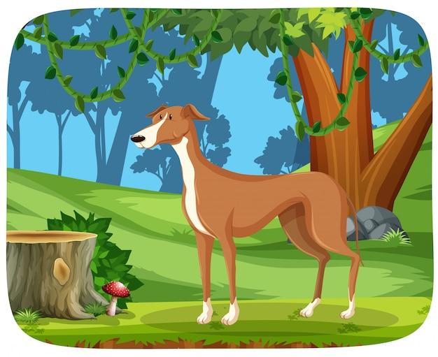 Ein windhund im naturhintergrund