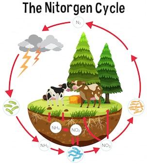 Ein wissenschafts-poster des stickstoffzyklus