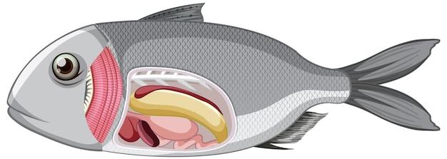 Eine anatomie von fischen auf weißem hintergrund