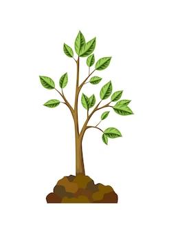 Eine der stufen des baumwachstums. baumwachstum mit grünem blatt und zweigen, naturpflanze.