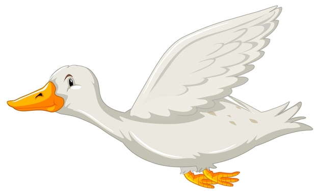 Eine fliegende ente auf weißem backgrounf