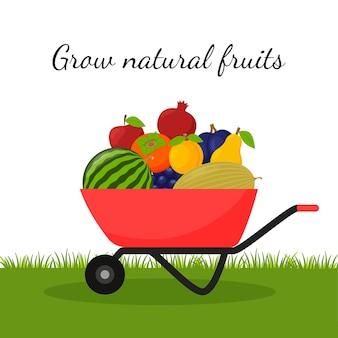 Eine gartenschubkarre gefüllt mit reifen früchten. ernte von natürlichen früchten.