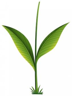 Eine grüne pflanze