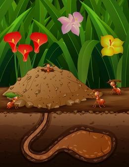 Eine gruppe arbeitender ameisen im boden
