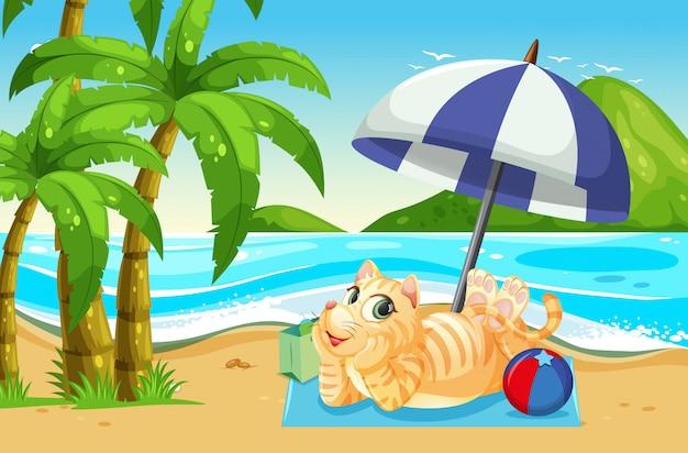 Eine katze am strand entspannen