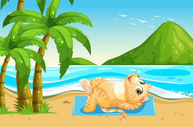 Eine katze in den sommerferien