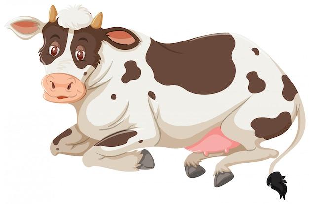 Eine kuh auf weißem hintergrund