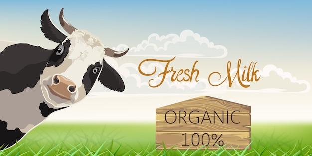 Eine kuh mit schwarzen flecken mit einer wiese im hintergrund. bio-frischmilch.