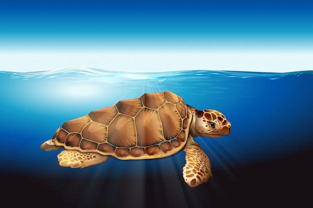 Eine meeresschildkröte