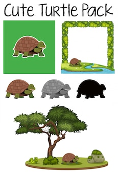 Eine packung schildkröte