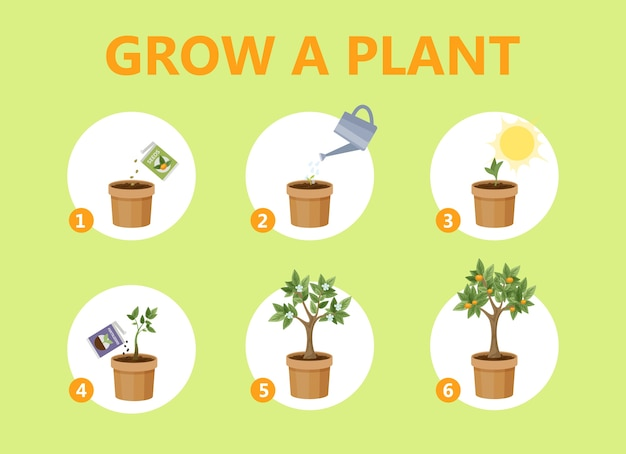 Eine pflanze in der topfführung anbauen. schritt für schritt anleitung zum züchten einer blume. keimwachstumsprozess. gartenempfehlung. isolierte flache vektorillustration