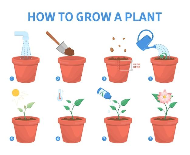 Eine pflanze in der topfführung anbauen. schritt für schritt anleitung zum züchten einer blume.