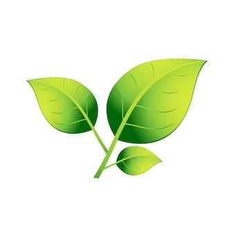 Eine pflanze mit drei grünen blättern auf weißem hintergrund. eps 10.