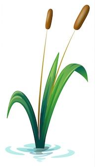 Eine pflanze