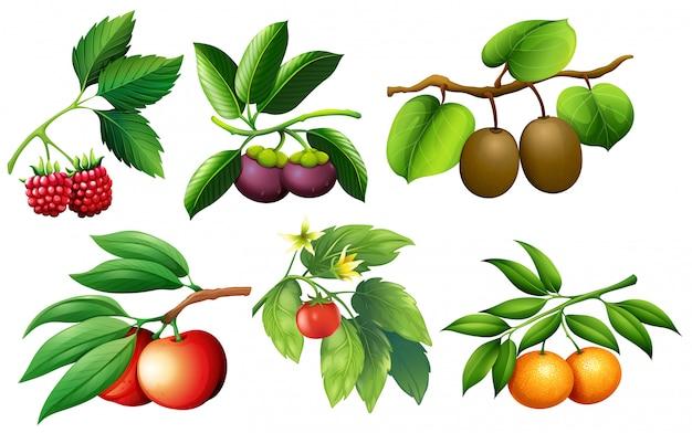 Eine reihe von früchten und ästen