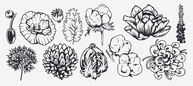 Eine reihe von illustrationen zu einem floralen thema. kann als element für design, hintergrund, dekoration, druck auf stoff und für viele andere zwecke verwendet werden