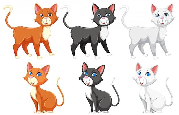 Eine reihe von verschiedenen katzen