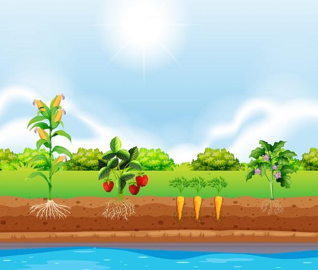 Eine reihe von wachsenden pflanzen