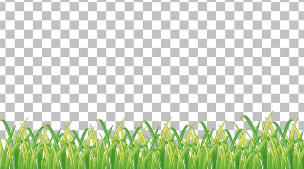Einfache rasenfläche auf transparentem hintergrund