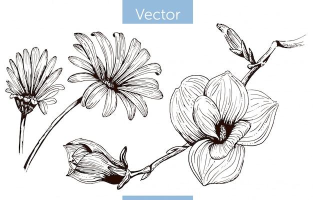 Einfarbige gezeichnete blumen des vektors hand